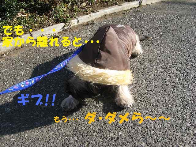 c0202659_22304131.jpg