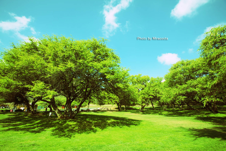 緑強化 -World of 16 in Hawaii-_e0140159_1641617.jpg