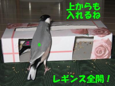 b0158061_19385027.jpg