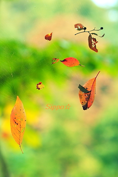 ■■里山の秋■■_c0195662_18271820.jpg