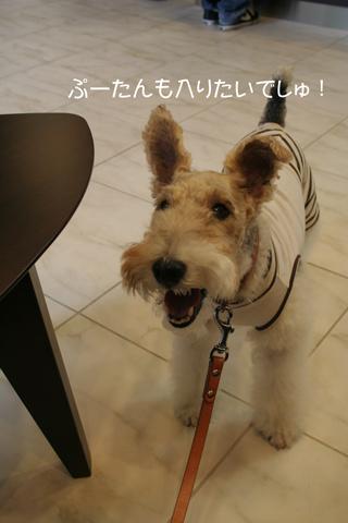愛犬のための食事セミナーに行ってきました_c0070377_2353357.jpg