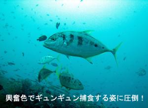 潜水万歳!_f0144385_21495443.jpg
