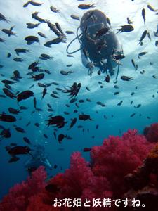 潜水万歳!_f0144385_2149997.jpg