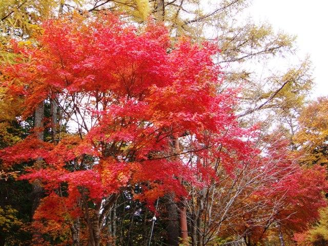紅葉を見に行こう!_a0126590_5393552.jpg
