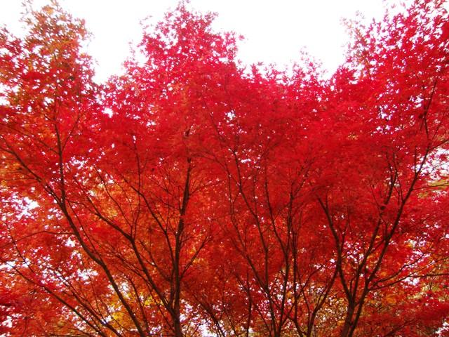 紅葉を見に行こう!_a0126590_545850.jpg