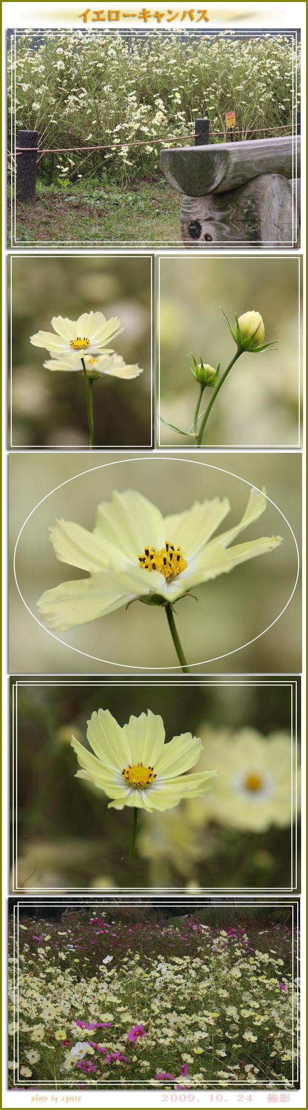 f0164592_1325420.jpg