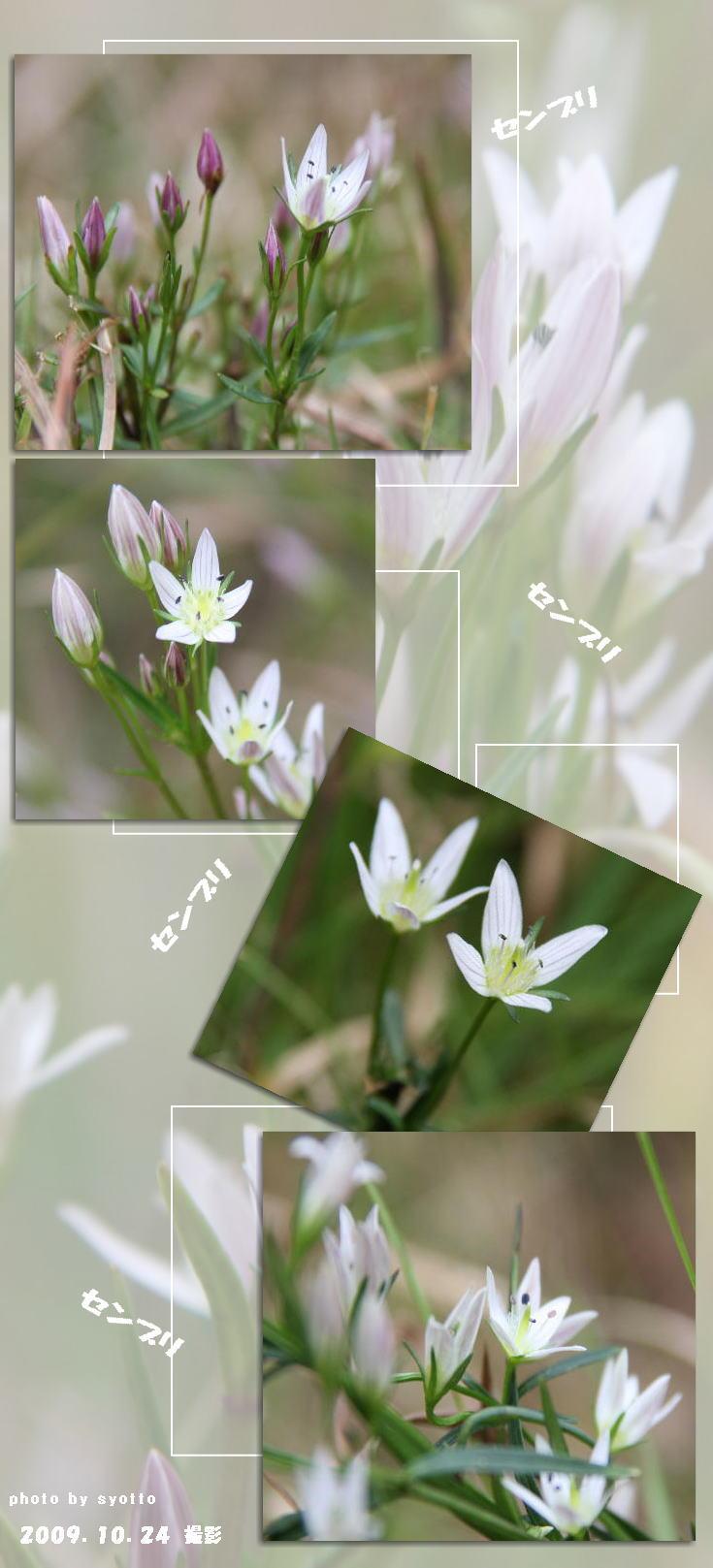 f0164592_1341123.jpg