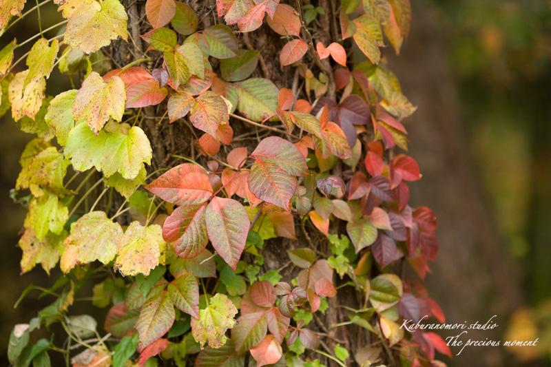 09/10/17  七色ツタの森_c0137403_14275578.jpg