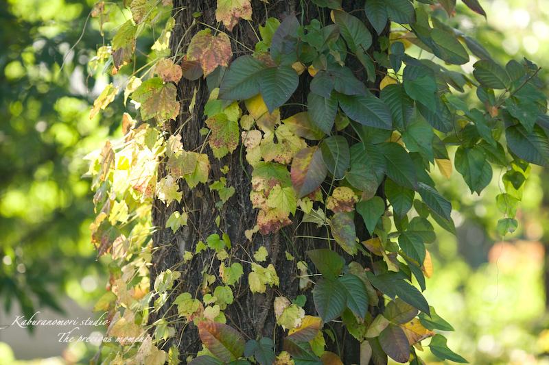 09/10/17  七色ツタの森_c0137403_1428333.jpg