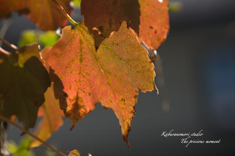09/10/17  七色ツタの森_c0137403_1429135.jpg