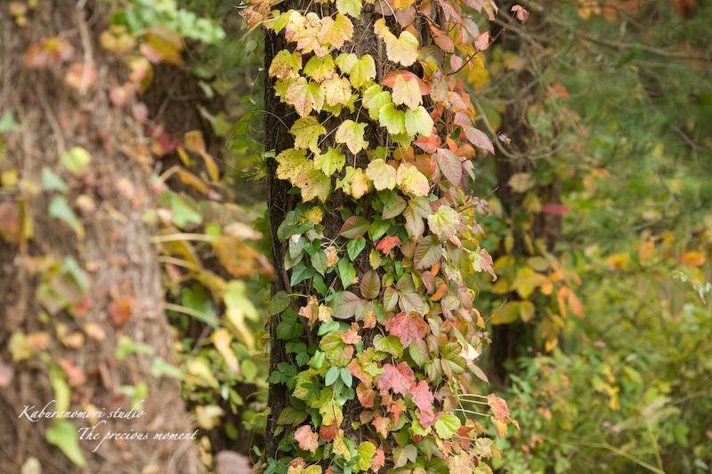 09/10/17  七色ツタの森_c0137403_1430060.jpg