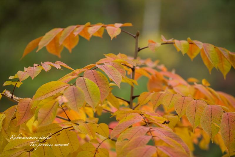 09/10/17  七色ツタの森_c0137403_14303641.jpg