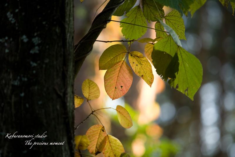 09/10/17  七色ツタの森_c0137403_14305310.jpg