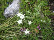 花の谷_b0176010_109292.jpg