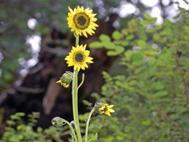 花の谷_b0176010_1093685.jpg