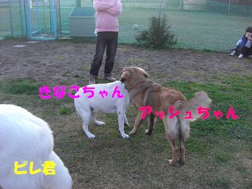 f0170713_10423492.jpg
