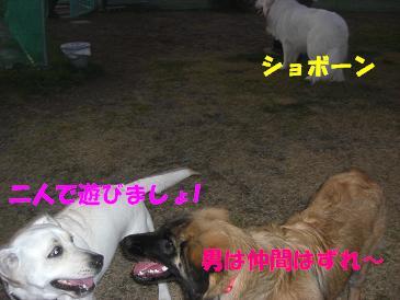 f0170713_10425193.jpg
