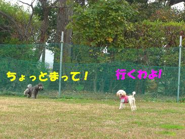 f0170713_1431093.jpg