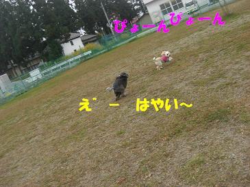 f0170713_14312731.jpg