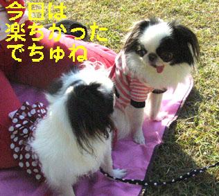 京都御所でランチ_c0199014_10362451.jpg