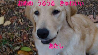 c0221715_17292512.jpg