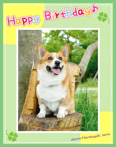 りきくん、お誕生日おめでとう♪_d0102523_1244654.jpg