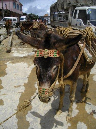 泥まみれの馬_f0055745_2101838.jpg