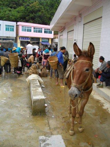 泥まみれの馬_f0055745_210477.jpg