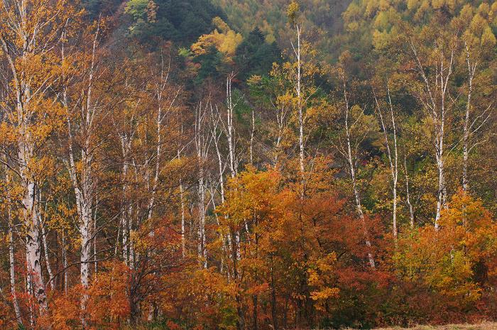 乗鞍の紅葉~富士山へ走る_f0155048_1201172.jpg