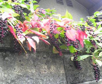 色づく秋_c0185356_8331959.jpg