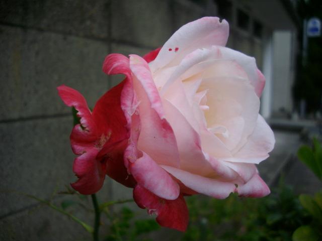 f0113862_2033056.jpg