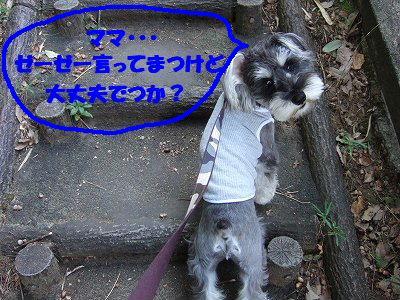 b0143879_2038670.jpg