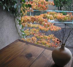 秋のやまぼうし 2009_e0055098_21531615.jpg