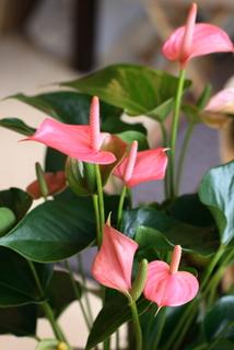 素敵な花屋さん_a0135999_18375079.jpg