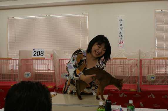 TICA AJC キャットショー@チョコちゃんデビュー&ブルースリー_e0033609_16331589.jpg