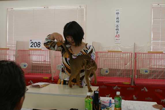 TICA AJC キャットショー@チョコちゃんデビュー&ブルースリー_e0033609_16333936.jpg