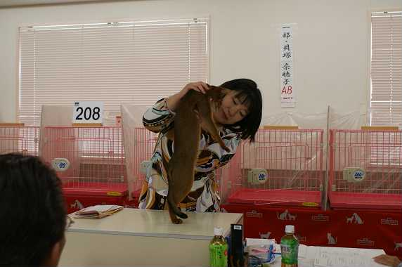 TICA AJC キャットショー@チョコちゃんデビュー&ブルースリー_e0033609_16335163.jpg