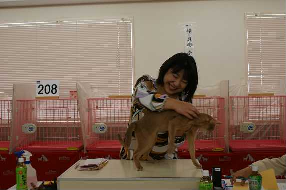 TICA AJC キャットショー@チョコちゃんデビュー&ブルースリー_e0033609_16381943.jpg