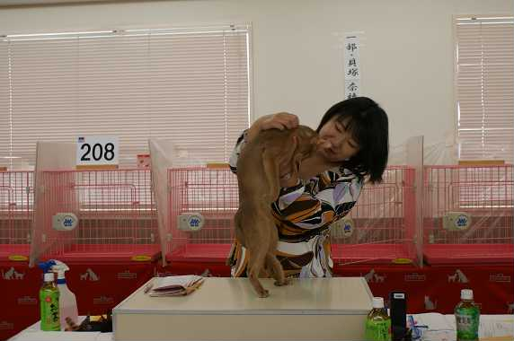 TICA AJC キャットショー@チョコちゃんデビュー&ブルースリー_e0033609_16384599.jpg