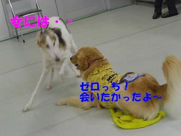 f0170713_858980.jpg