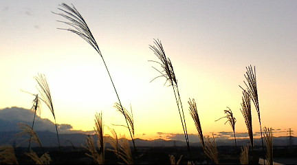 秋ですね…きょうの夕景_b0032617_1711341.jpg