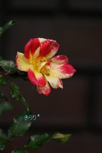 f0170524_1551571.jpg