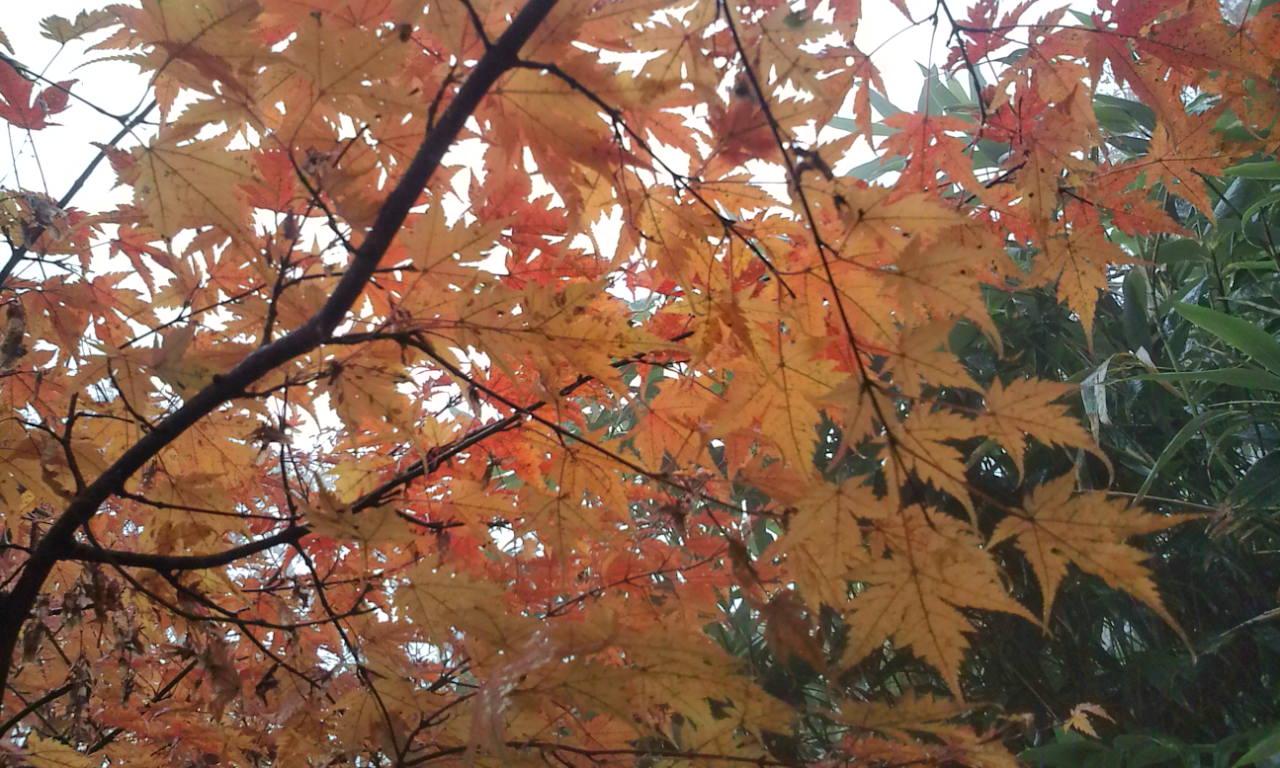 10月27日(火) ・・・ 晩秋の氷ノ山!_f0101226_214221.jpg