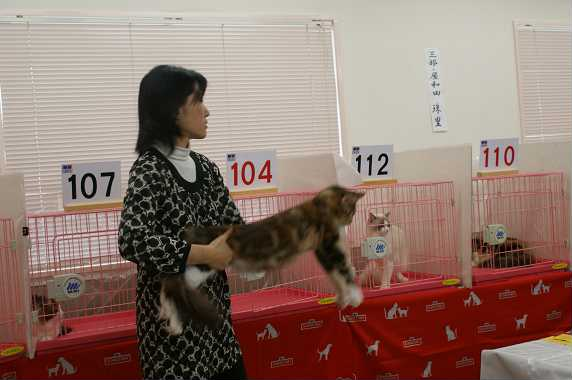 TICA AJC キャットショーお礼_f0168339_15433798.jpg