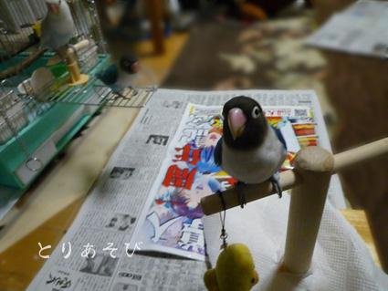 鳥まっしぐら_e0147757_20394364.jpg