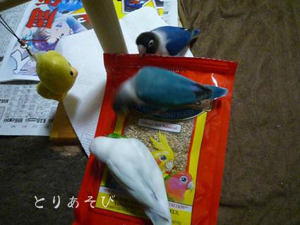 鳥まっしぐら_e0147757_20412628.jpg