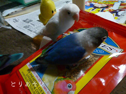 鳥まっしぐら_e0147757_20442322.jpg