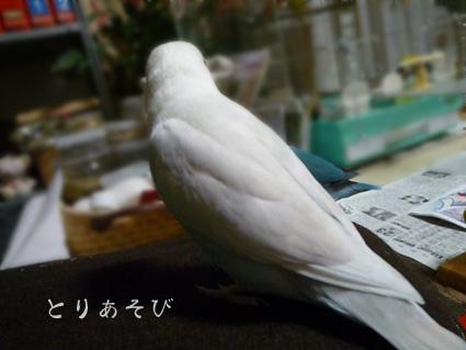 鳥まっしぐら_e0147757_20485363.jpg