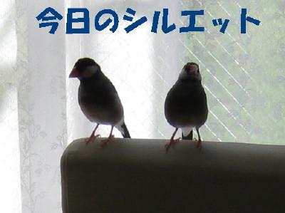 b0158061_2252077.jpg