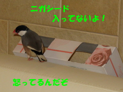 b0158061_2262710.jpg